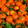 柑橘类黄酮Nobiletin可以减轻肥胖扭转其负面影响