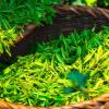 绿茶提取物加运动可能减轻与肥胖相关的脂肪肝疾病