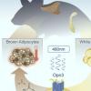 动物研究显示脂肪细胞可以感知光