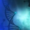 基因编辑工具包使科学家可以同时创建各种疟疾菌株