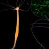 微生物组如何参与癌症的发展