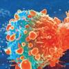 研究揭示了为什么某些前列腺癌更具侵略性
