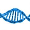 科学家揭示蛋白质如何协同修复DNA