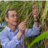 杂草稻米是绿色革命的意外遗产