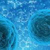 识别出免疫活性为抗癌治疗带来新的可能性