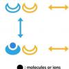 模型确定细胞采用哪些技术来提高灵敏度