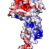 新的埃博拉研究指出潜在的药物靶标