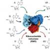 生物化学家可以捕获并可视化酶的活性