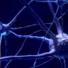 研究人员获得了对大脑疼痛信号的新见解