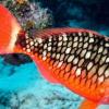 研究发现鱼类具有多种独特的肠道微生物