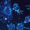 细胞外力帮助上皮细胞粘在一起