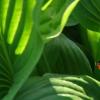 遗传自我激活维持植物干细胞