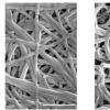 胶原蛋白的强度受纤维交叉影响