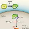 通过调节核受体RXR的药物来调节这些巨噬细胞的数量和活性