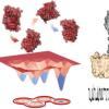 纳米孔揭示了与催化作用有关的形变酶