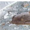 释放海洋微生物遗传潜能方面的突破