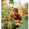 野番茄对细菌性溃疡病的抵抗力对商业番茄产业具有重要意义