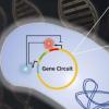 研究人员揭示了对合成基因电路的新认识