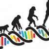 进化研究将双足膝盖形态的细微变化与生命后期的骨关节炎联系起来