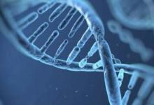 研究人员确定新的生物标志物以追踪NAFLD的发展