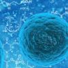 肌动蛋白的了解进展揭示了细胞功能