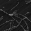 研究发现放射性废物存储场所的微生物生命