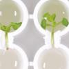 同步芽和根中生物钟的小蛋白质