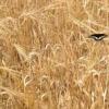 培育出一些新的农作物品种使其更具营养