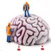 雷公藤甲素是IDH1突变神经胶质瘤的有价值的治疗方法