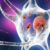 ATP1B基因突变是帕金森氏症的危险因素