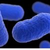 脆弱的细胞通过消耗表面胆固醇来抵抗感染