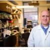 神经胶质瘤的恶性脑瘤通常不会对免疫治疗药物产生反应