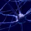 药物可预防放射线治疗脑肿瘤后小鼠的认知障碍