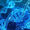 研究表明线粒体小蛋白在能量产生中的重要性