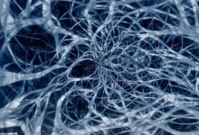 研究人员发现了一组特殊的神经细胞的功能