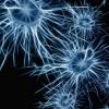 新技术旨在改善神经系统疾病的治疗