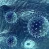 肾脏移植后使用抗生素不能预防病毒感染