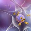 新研究进一步证明 自身免疫在帕金森氏病中起作用