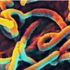 吸入埃博拉疫苗可能提供长期保护 免受病毒侵害