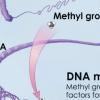 研究人员将与年龄有关的DNA修饰与对眼疾的敏感性联系起来