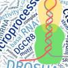 科学家发现多种RNA元素如何控制microRNA生物发生