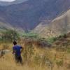 在线工具有助于保护热带森林