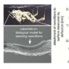 蜘蛛梳驯服不守规矩的纳米纤维