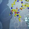 发现蛋白质构型可以导致更有效的抗肥胖症治疗