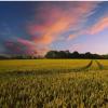 新研究探索了农作物覆盖物残留物对杂草控制的影响