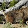 抗氧化酶对于山猫黄体的寿命很重要
