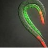 RNA降解有助于高级真核生物中的基因沉默