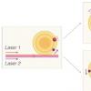 碰撞光学微谐振器中的孤子以揭示重要的基本物理学