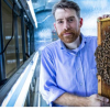 病毒感染的蜜蜂更有可能进入健康的蜂