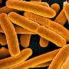 对抗生素具有持续耐药性的细菌被引发成为具有多重耐药性的细菌